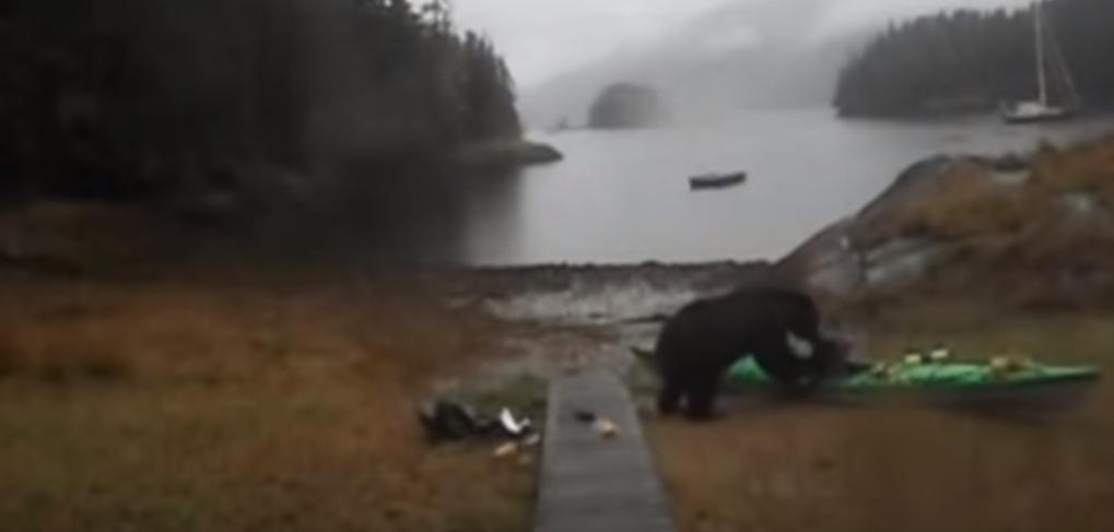 Emotional Video Shows Bear Attacking a Woman's Kayak