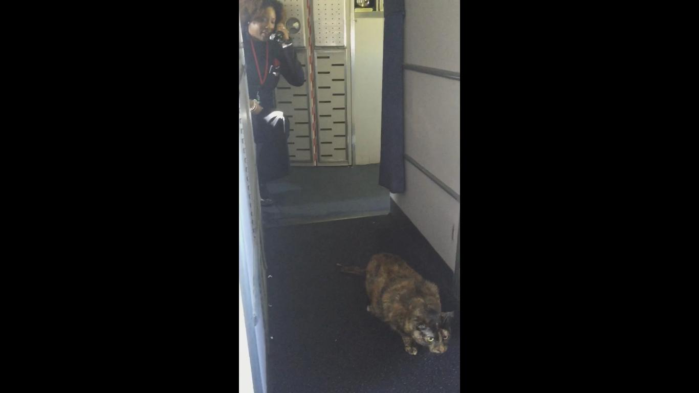 Flight Attendent Freaks out on a Cat Walking in the Plane