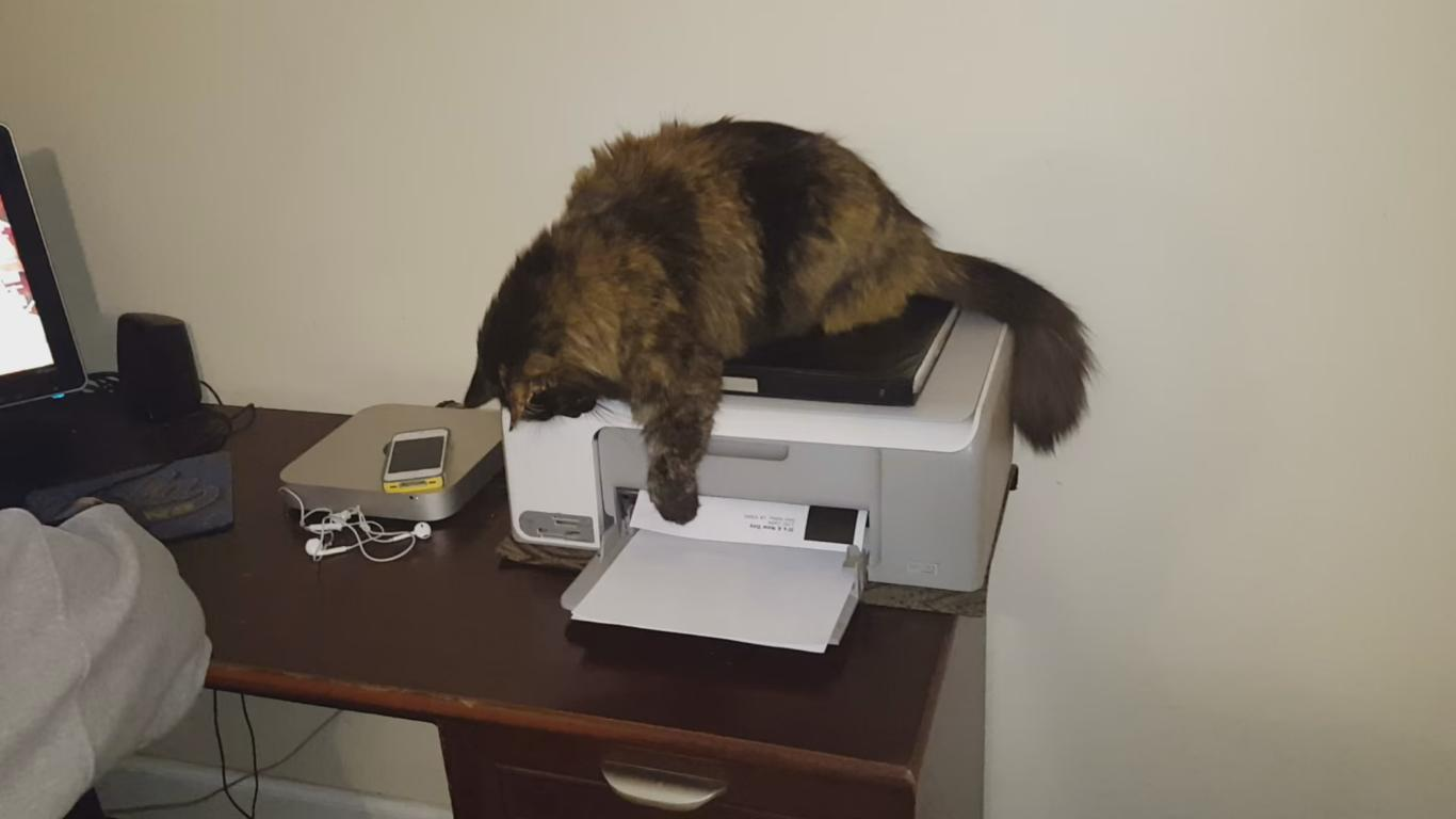 Cat Won't Let His Owner Use the Printer