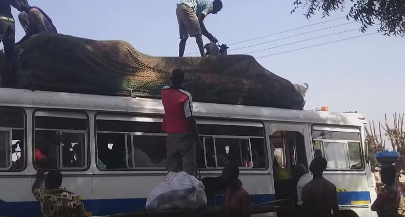 That's How You Place Goats on Top of Bus