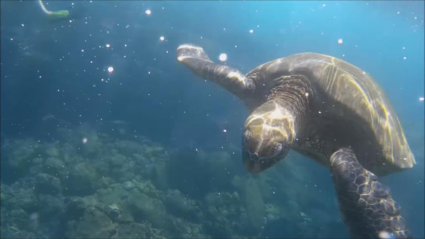 A Huge Turtle Came Saying Hi to This Diver