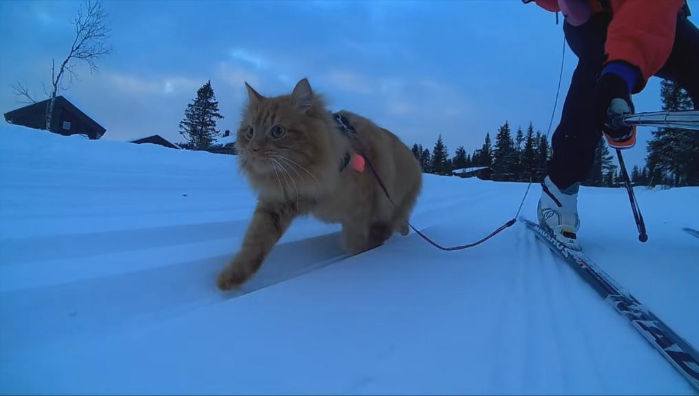 Cutest Cat Goes on Ski Adventure
