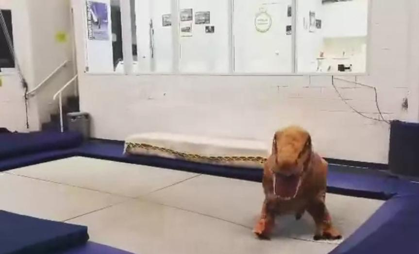 [GIF] Dinosaur Jumping Like Crazy on a Trampoline