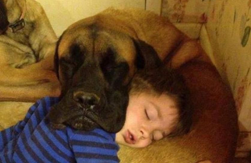 This Dog and This Kid Are Each Others Pillow