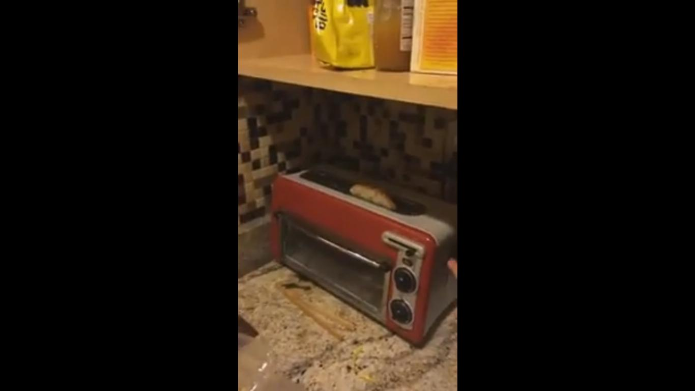 This Toaster Transforms the Whole Kitchen Into a Disco