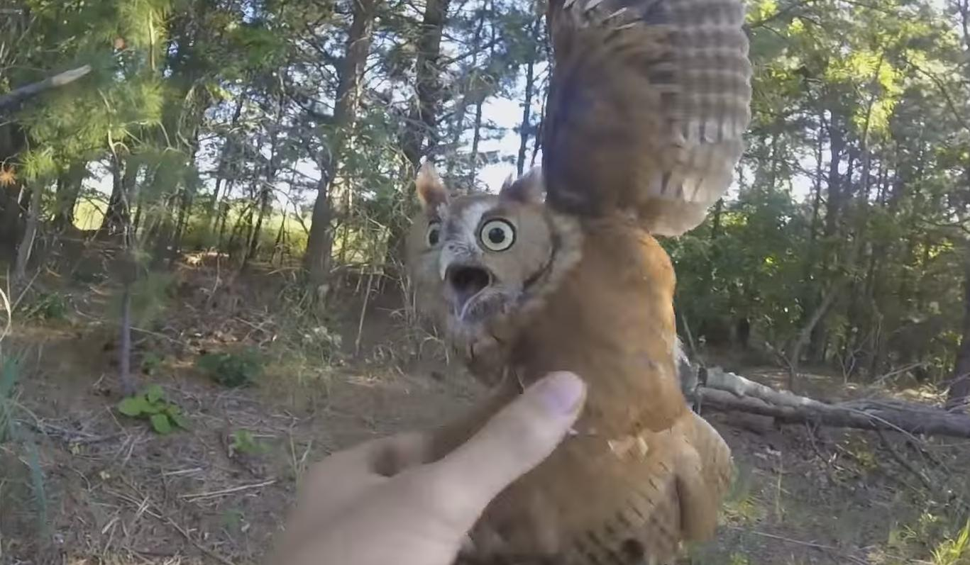Guy Rescues an Owl That Caught Himself Into a Fishing Line
