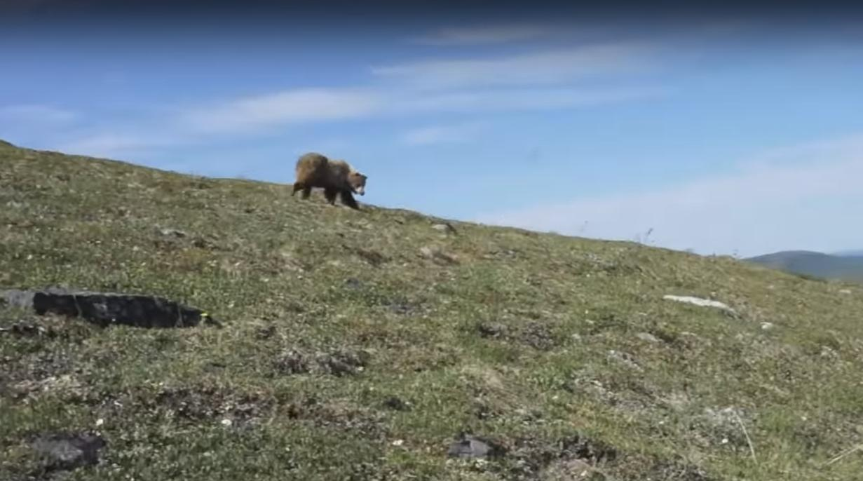 Man Encounters a Bear and Starts Yelling to Protect Himself