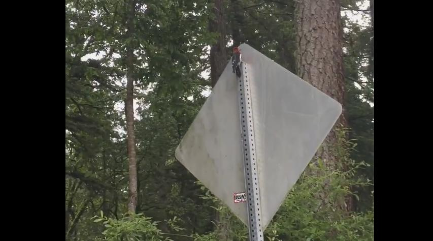 Woodpecker Gets Crazy on a Metallic Road Sign