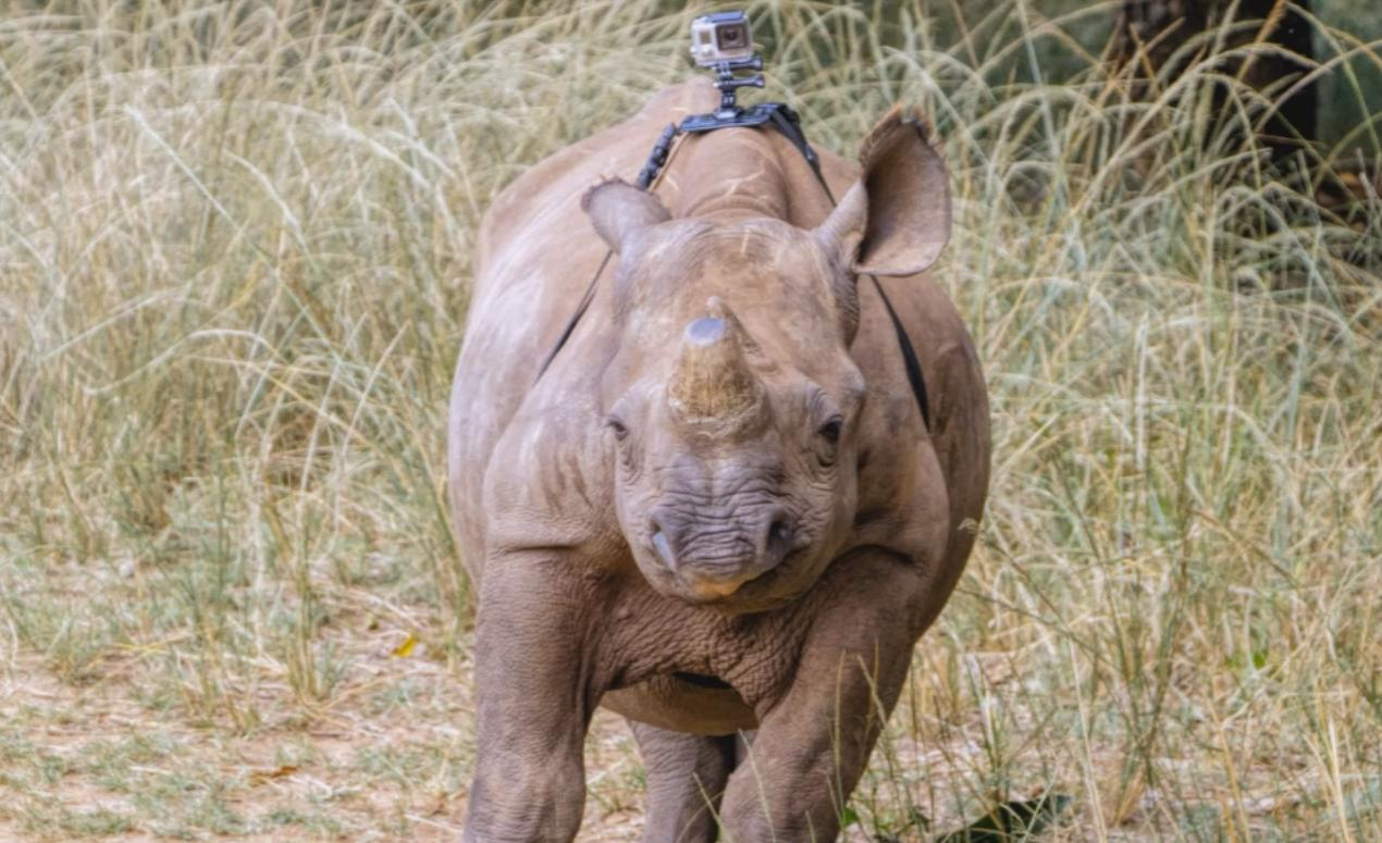 One Day on the Back of a Rhino With an Attached GoPro