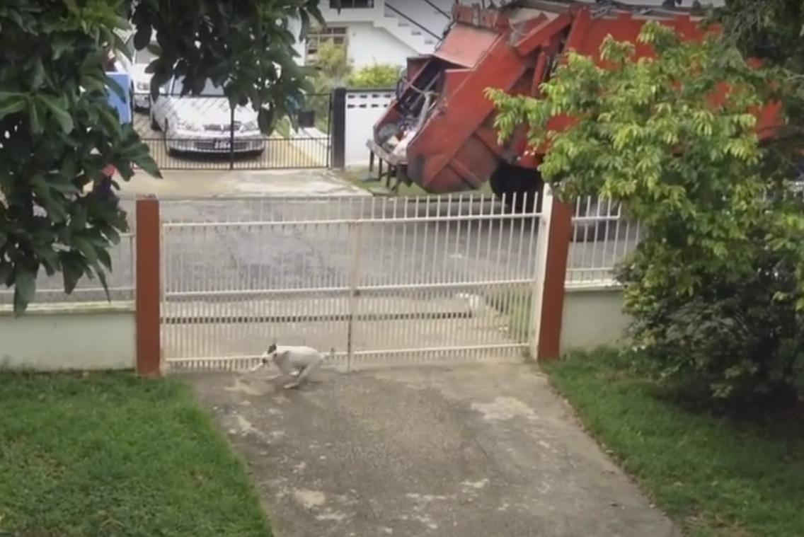 This Dog Gets Crazy Happy When the Garbage Truck Comes By